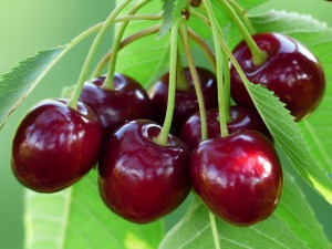 cherry-167341_1280