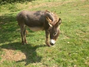 donkey-22654_1280