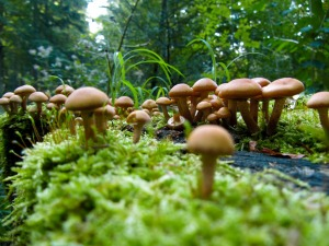 mushrooms-57856_1280
